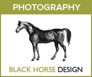 Black Horse Design Photography (Shropshire Horse)