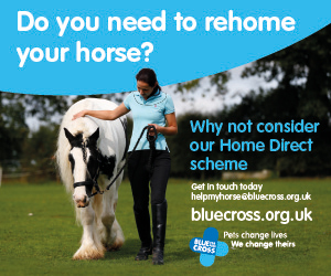 Blue Cross 2020 A (Shropshire Horse)
