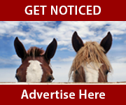 Get Noticed (Shropshire Horse)